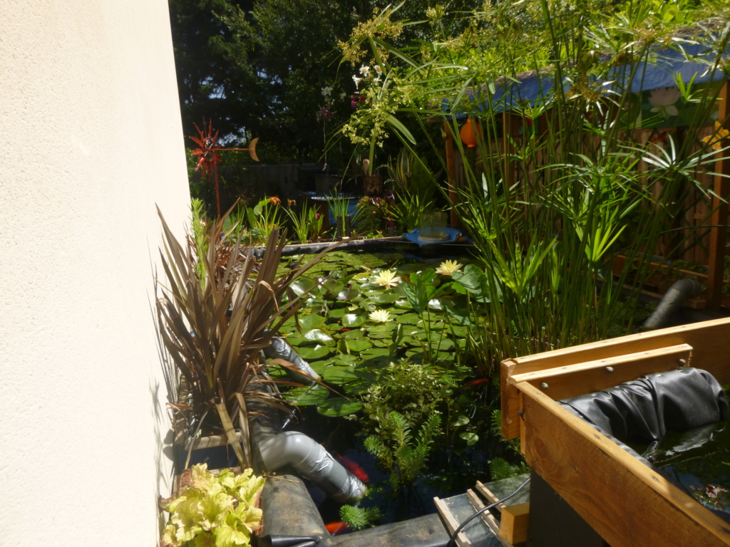 bassin de jardin 8000L - Page 42 P1000516