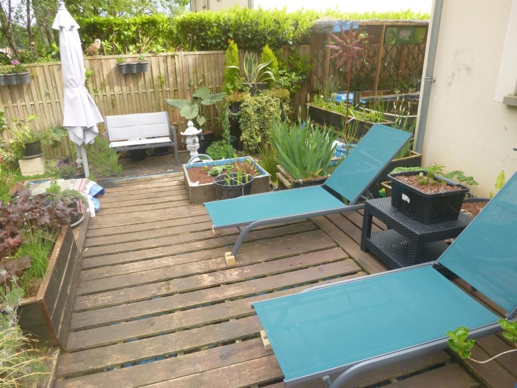 reamenagement de mon bassin de jardin - Page 11 P1020311