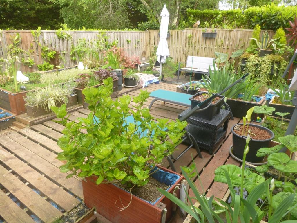 reamenagement de mon bassin de jardin - Page 11 P1020312