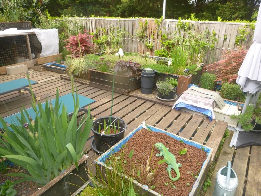 reamenagement de mon bassin de jardin - Page 11 P1020315