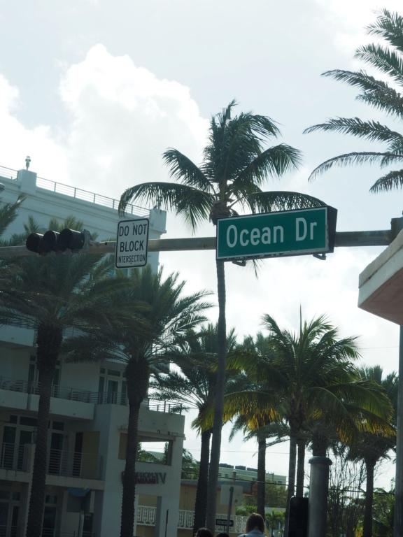 Inoubliable Floride- un rêve réalisé ! (février 2019) - Page 2 Oi000117