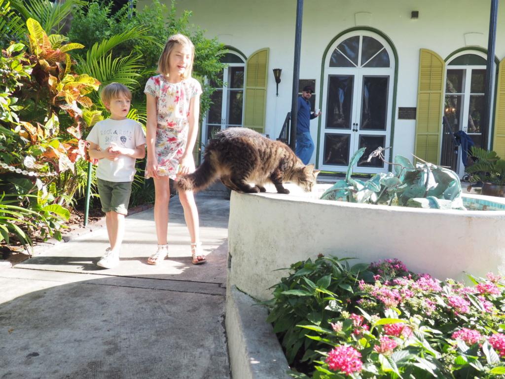Inoubliable Floride- un rêve réalisé ! (février 2019) - Page 3 Oi000124