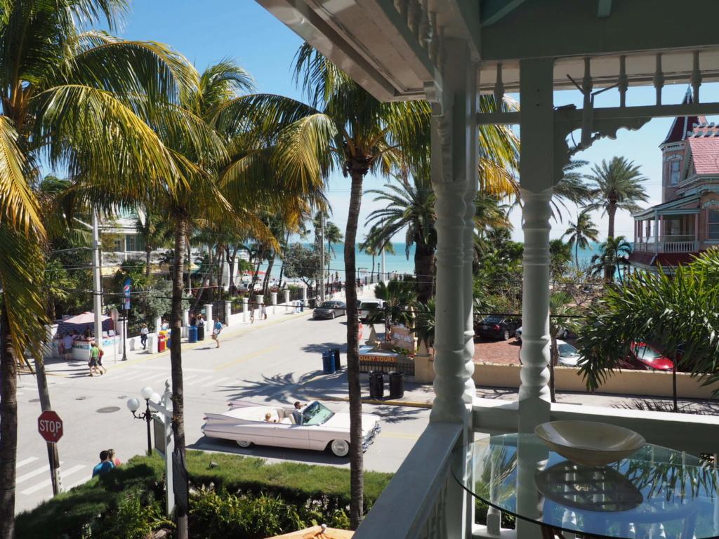 Inoubliable Floride- un rêve réalisé ! (février 2019) - Page 3 Oi000134