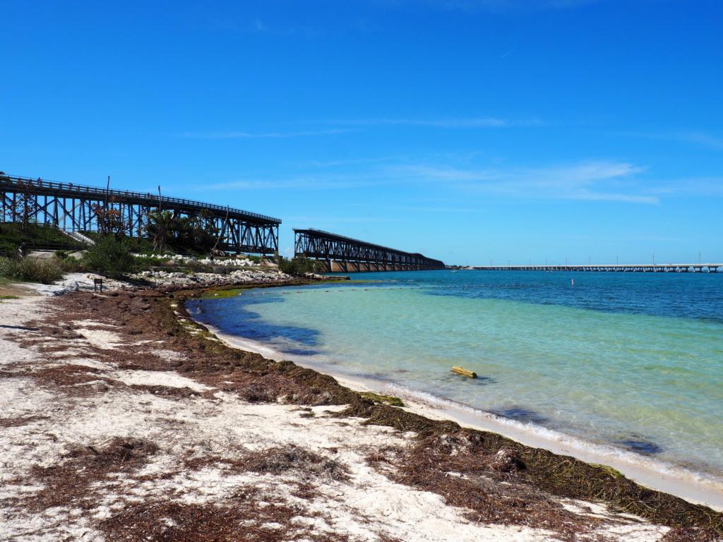 Inoubliable Floride- un rêve réalisé ! (février 2019) - Page 4 P2150613