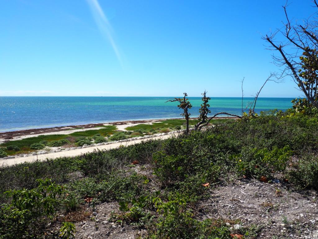 Inoubliable Floride- un rêve réalisé ! (février 2019) - Page 4 P2150616