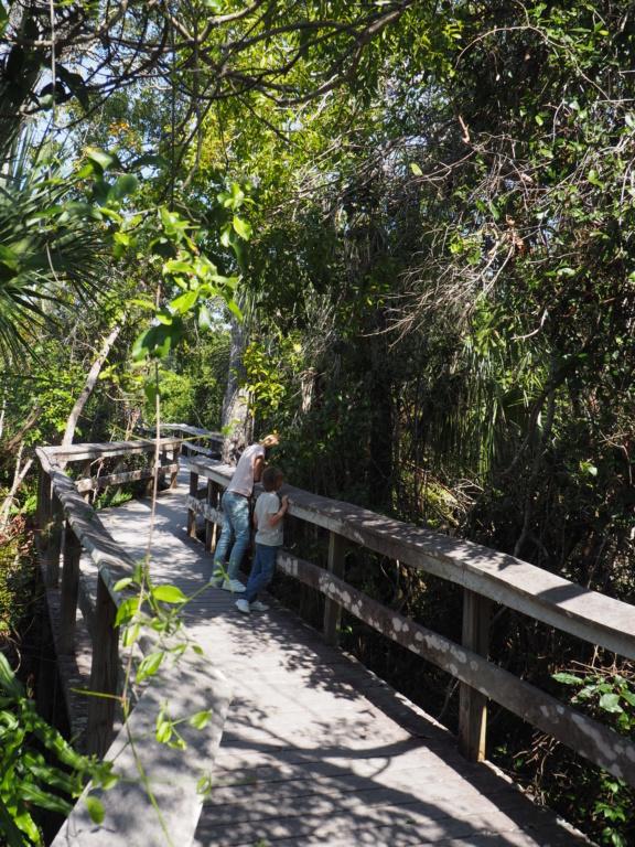 Inoubliable Floride- un rêve réalisé ! (février 2019) - Page 4 P2160713