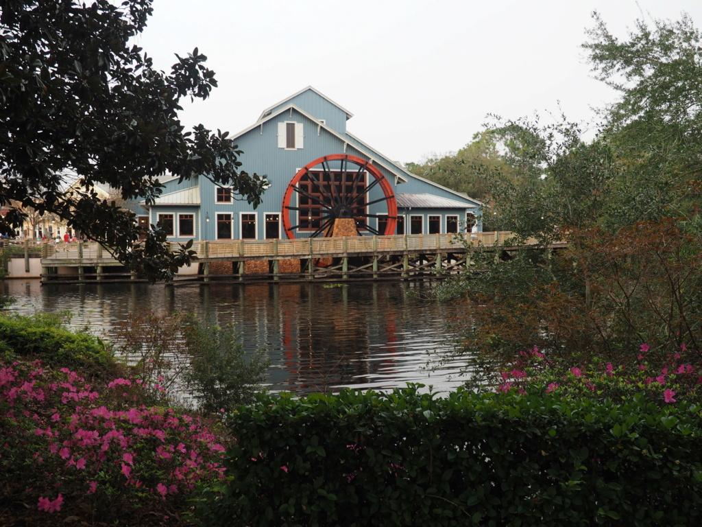 Inoubliable Floride- un rêve réalisé ! (février 2019) - Page 6 P2180912