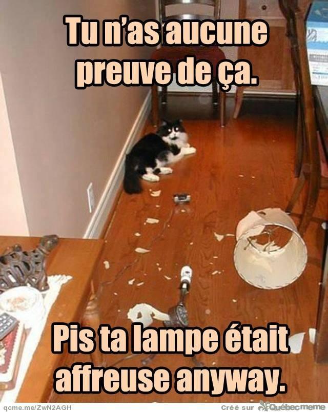 HUMOUR : le chat dans tous ses états - Page 31 10154310
