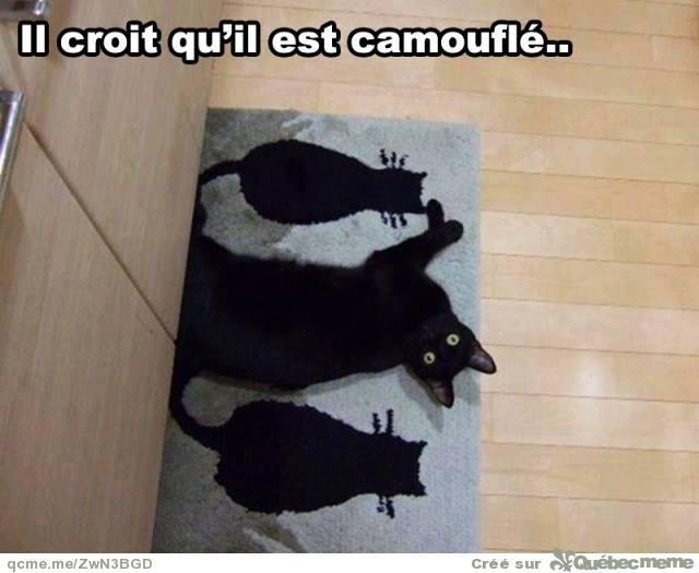 HUMOUR : le chat dans tous ses états - Page 31 10703710