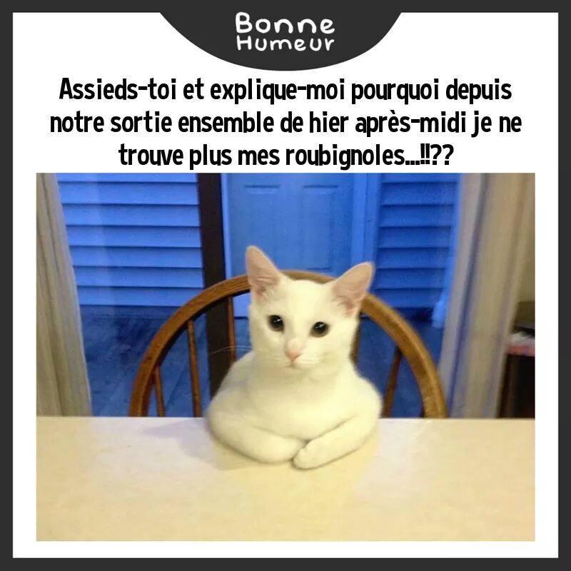 HUMOUR : le chat dans tous ses états - Page 23 16299210
