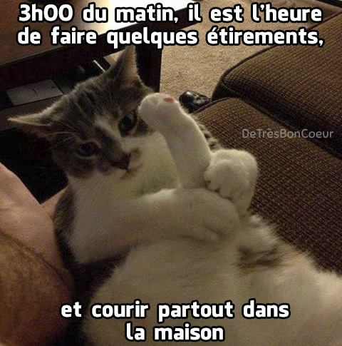 HUMOUR : le chat dans tous ses états - Page 37 17191210