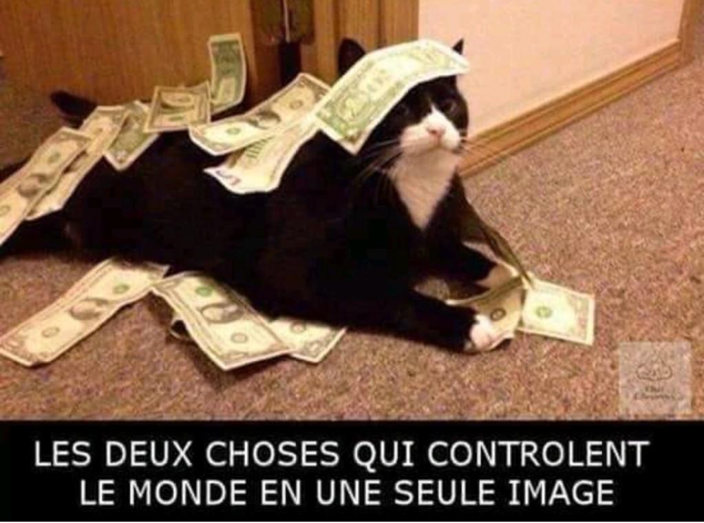 HUMOUR : le chat dans tous ses états - Page 37 41482810