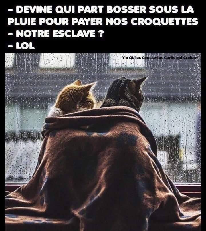 HUMOUR : le chat dans tous ses états - Page 39 42667310
