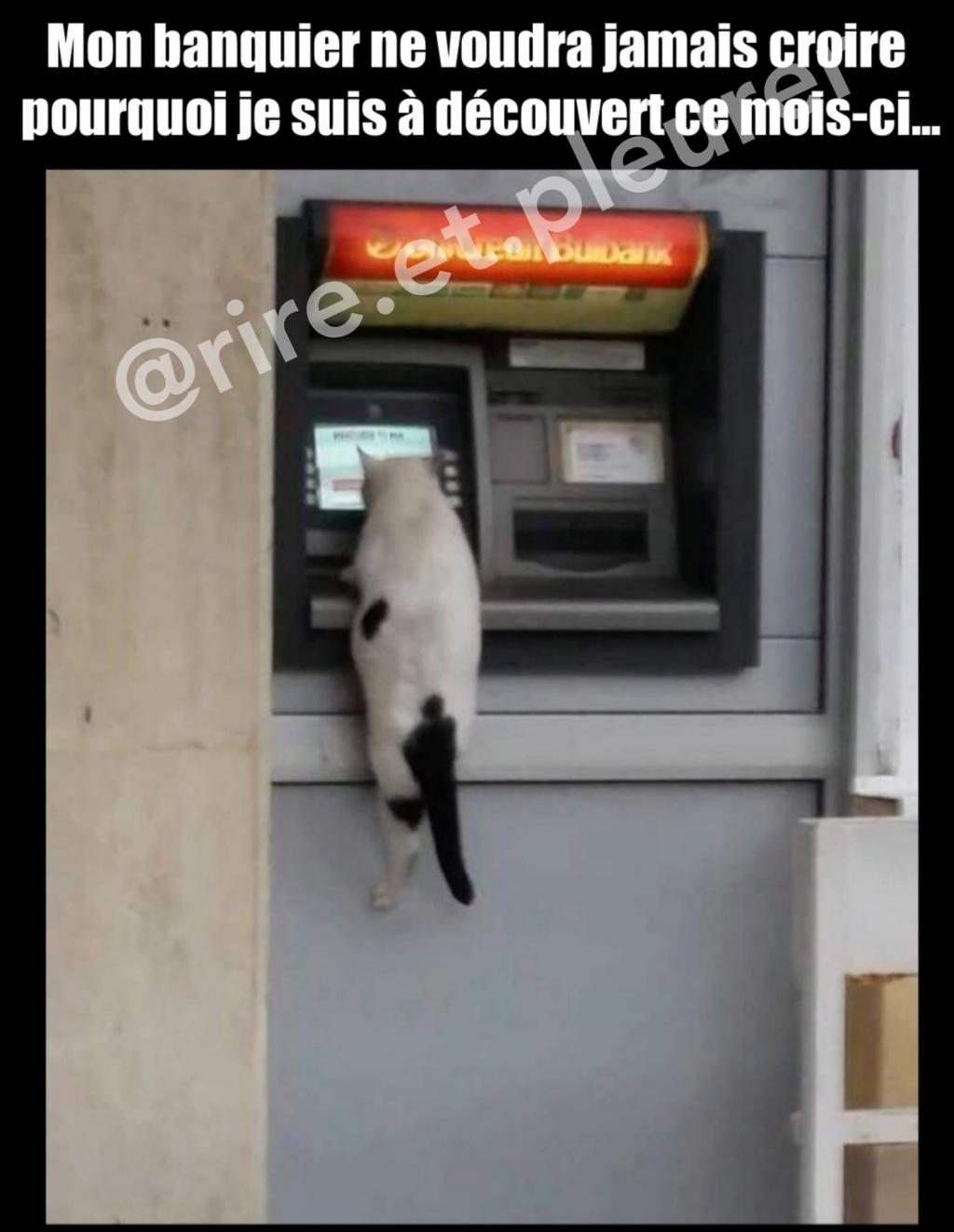 HUMOUR : le chat dans tous ses états - Page 37 43289710