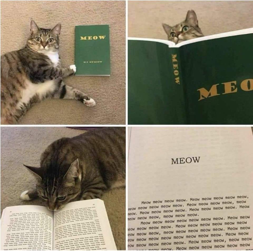 HUMOUR : le chat dans tous ses états - Page 37 43750710