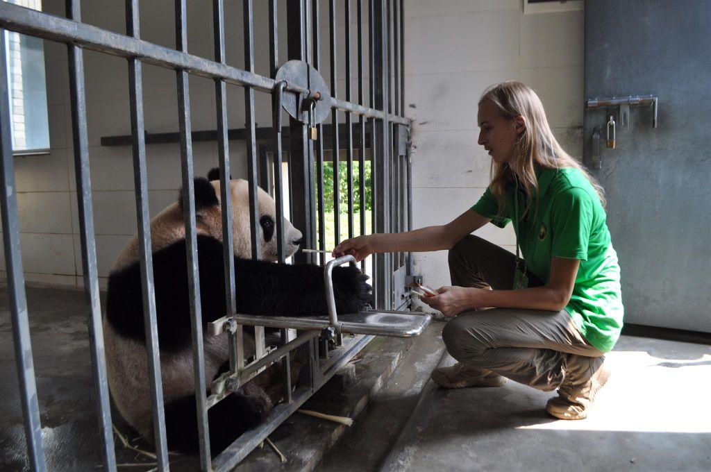 Panda, .......... un rêve devenu réalité 15325010