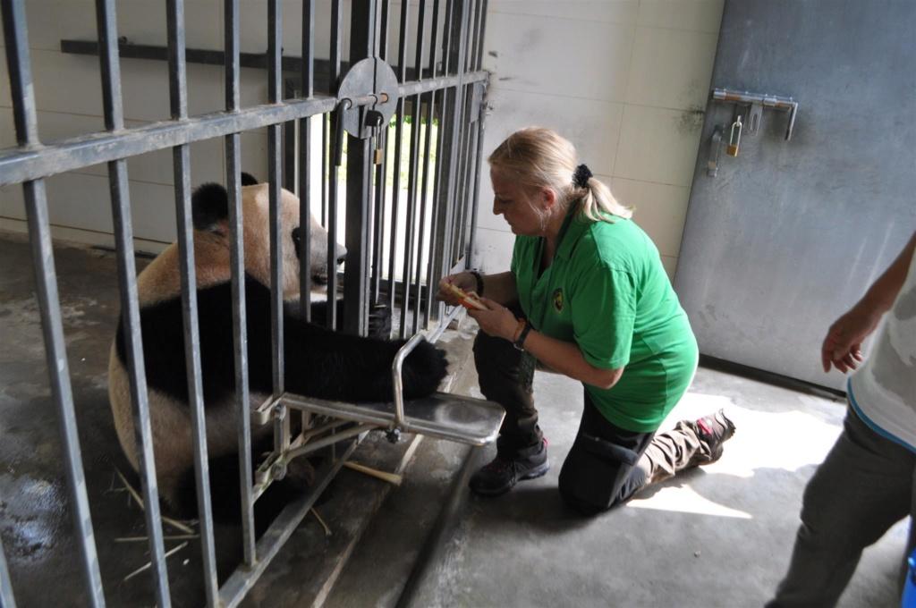 Panda, .......... un rêve devenu réalité Dsc_0110