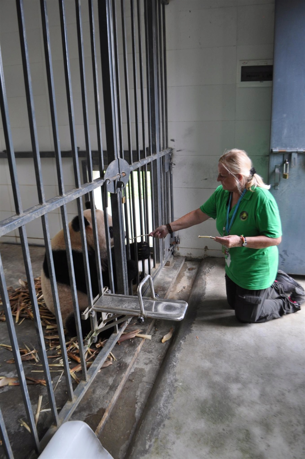Panda, .......... un rêve devenu réalité Dsc_0210
