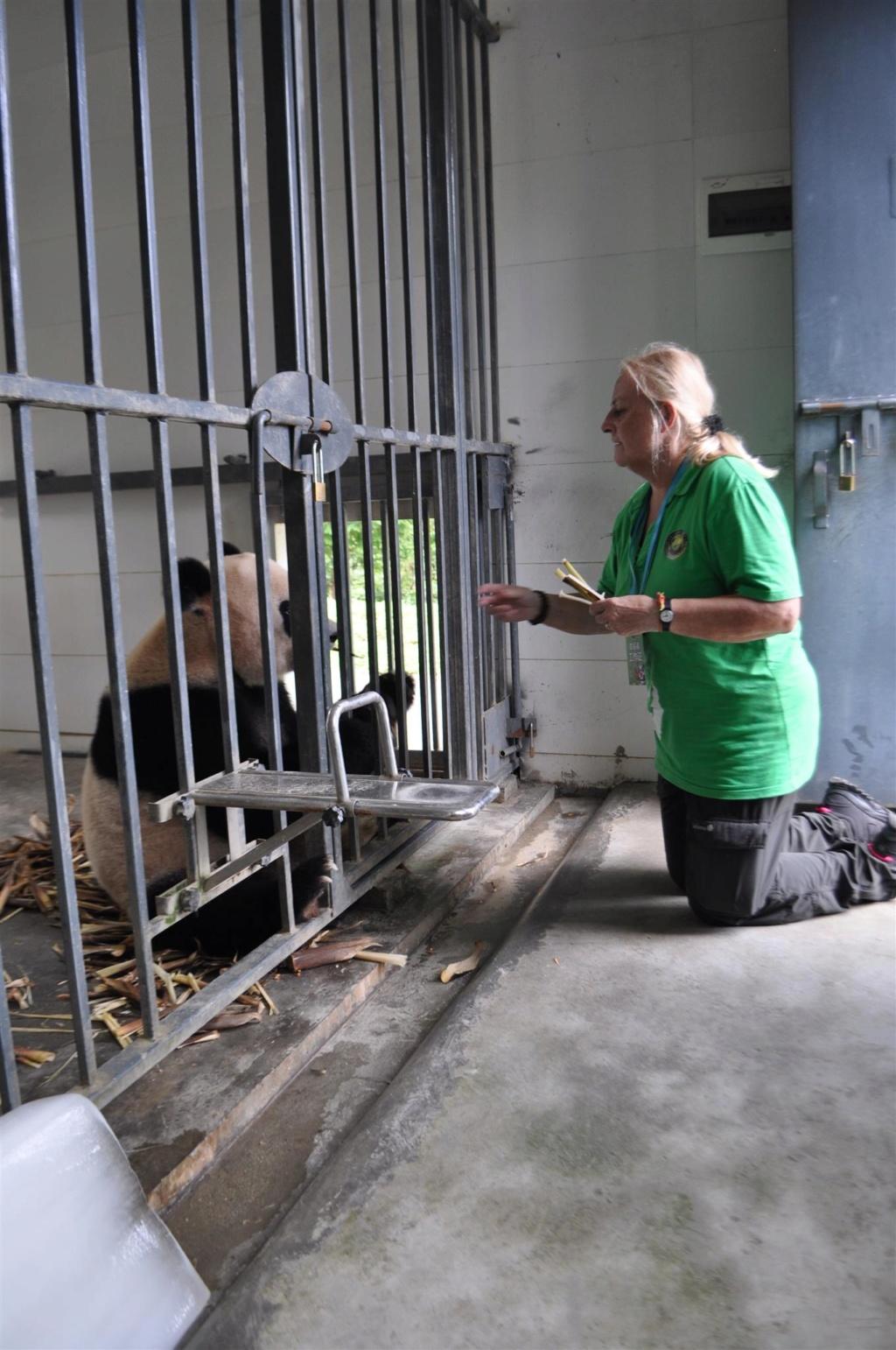 Panda, .......... un rêve devenu réalité Dsc_0211