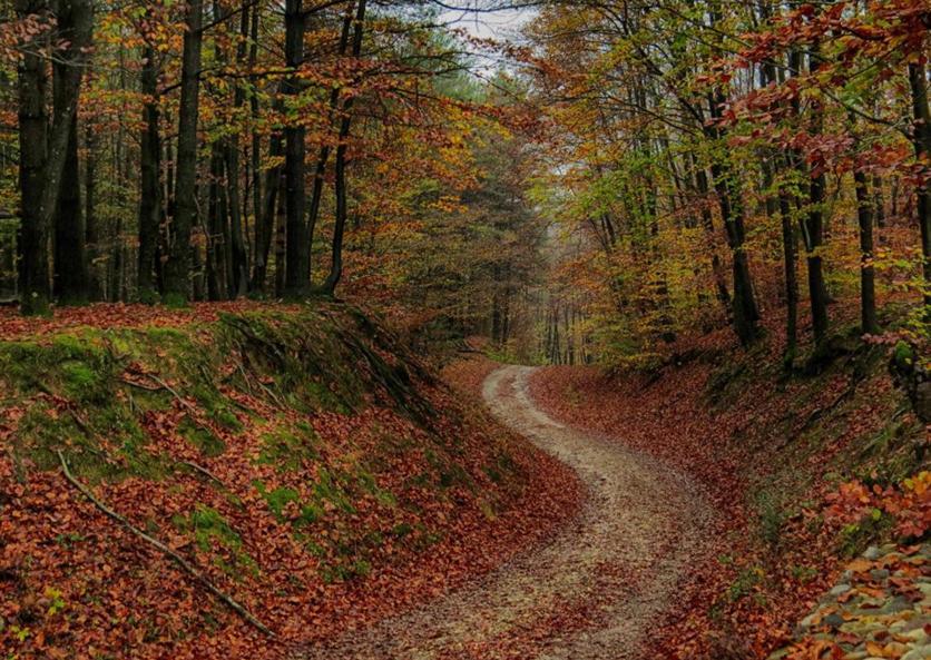 Renata E. Kučan - umijeće fotografije - Page 2 Jesen_10
