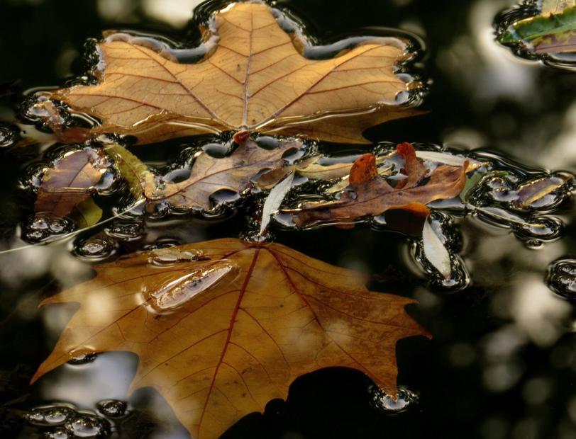 Renata E. Kučan - umijeće fotografije Leaves10