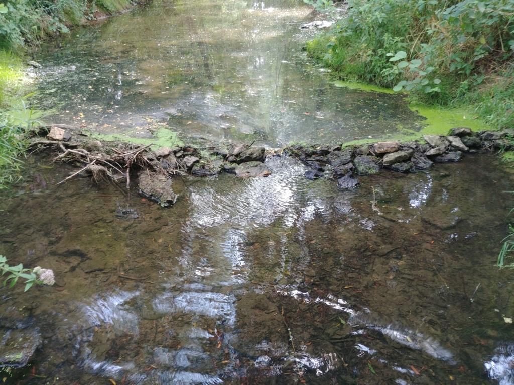 Barrage en ruisseau, plus de poisson ! 20190812