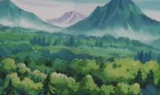 Ilex erdő