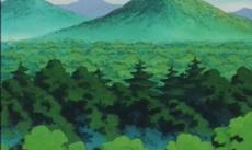 Zöldellő erdő