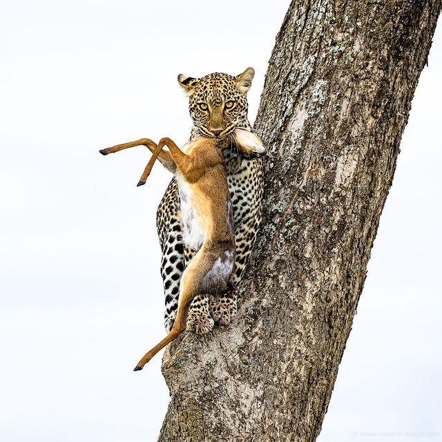 Animales - Naturaleza - Página 7 12614410