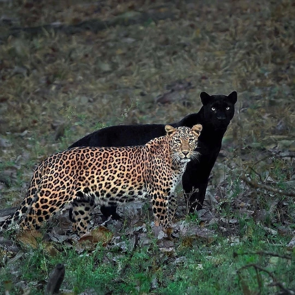 Animales - Naturaleza - Página 8 17854510
