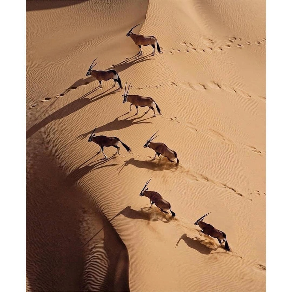 Animales - Naturaleza - Página 2 93219911