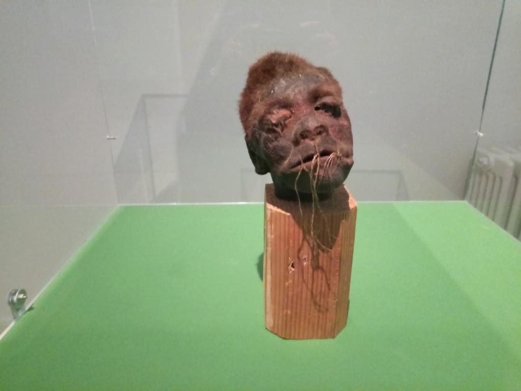 Museo de Carcasona (Carcassonne) 2018-163