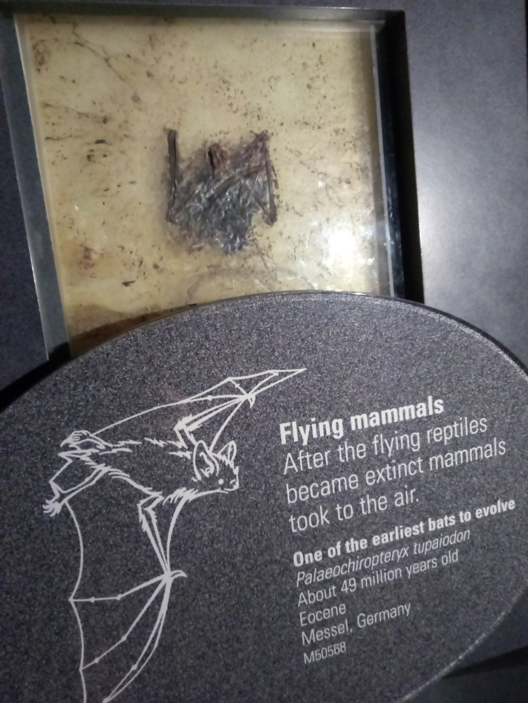 Museo de Historia Natural, Londres 2018-431