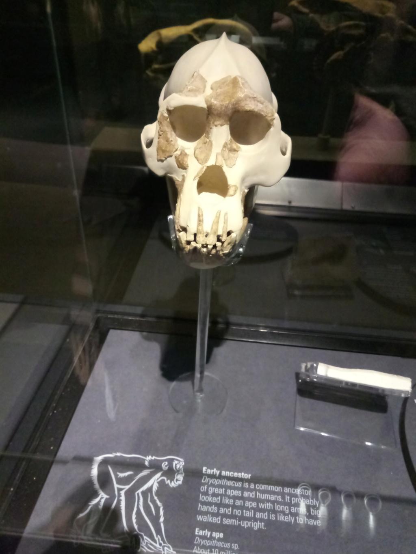 Museo de Historia Natural, Londres 2018-433