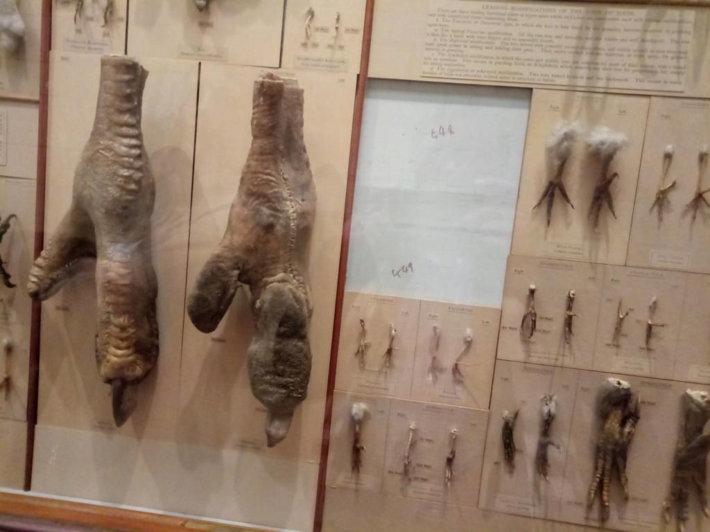 Museo de Historia Natural, Londres 2018-436