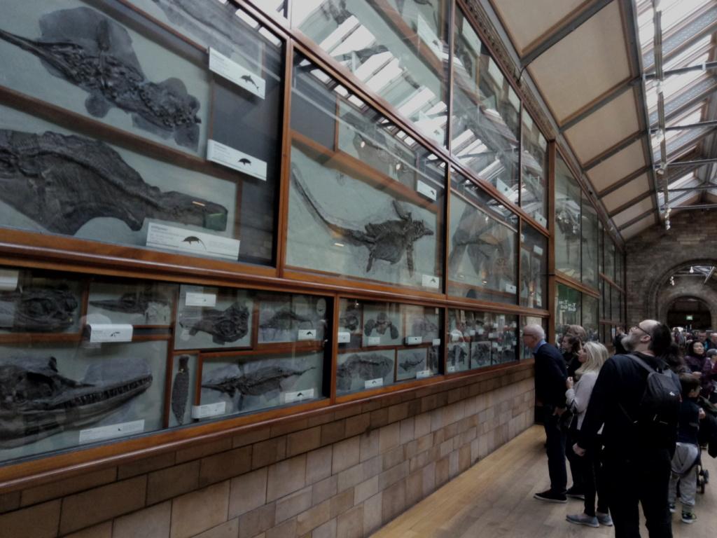 Museo de Historia Natural, Londres 2018-439