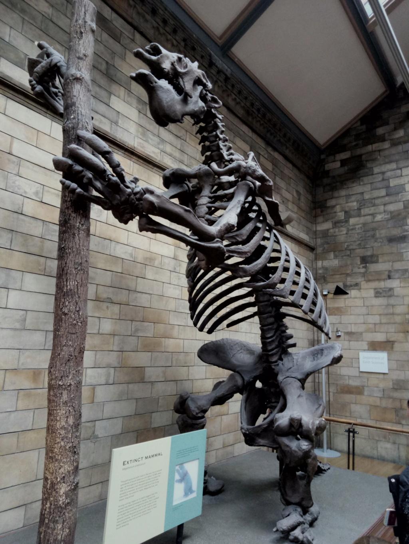 Museo de Historia Natural, Londres 2018-440