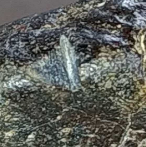 ¿Meteorito? 2021-040