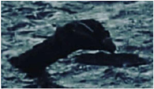 Il aurait photographié le monstre  Captur47