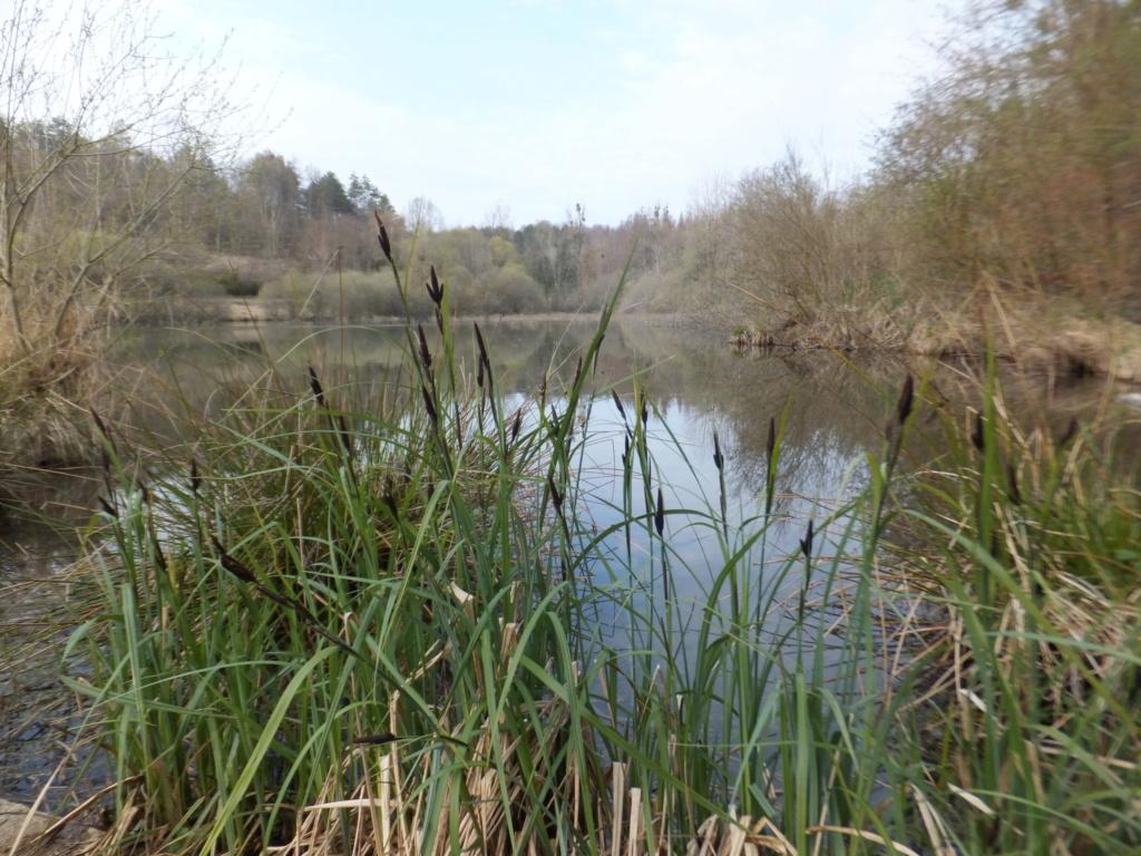 De l'étang de Vaux à Bezonvaux  Dscf0523