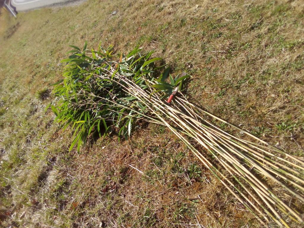 Flechas de bambú Img_2051