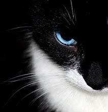 Pixel Portrait Requests Cat10