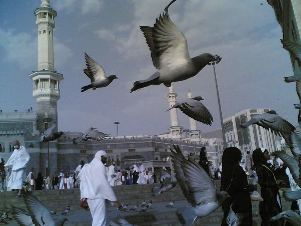 حكم من مر بطيور قرب الحرم بمكة فطارت  57504310