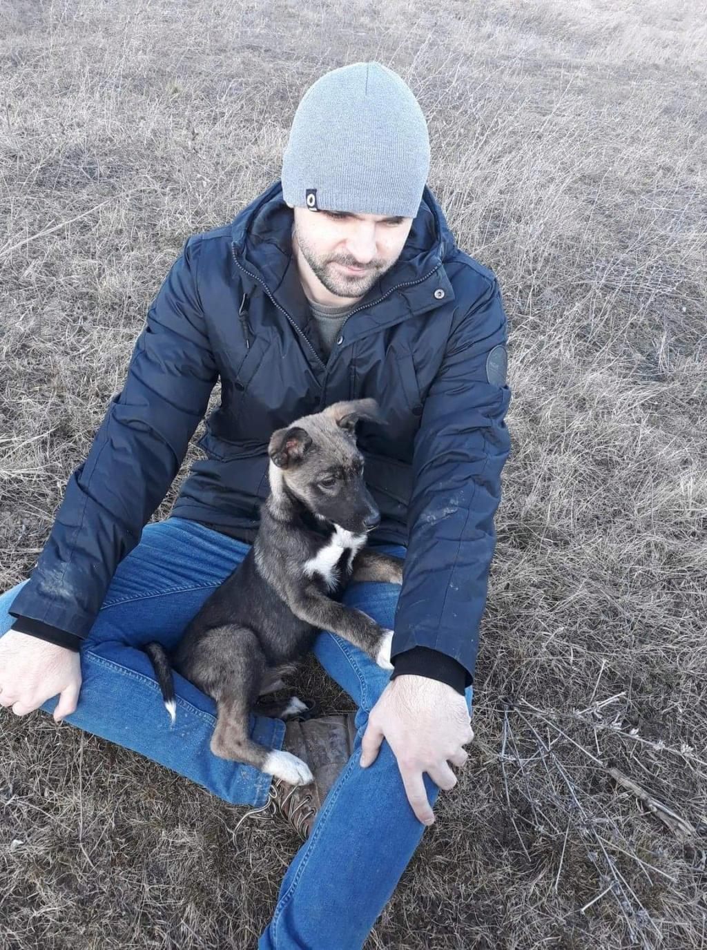 Archie- mâle- dans une famille d'accueil près de Târgu Frumos - sera en Famille d'Accueil dans le 67 en mars 04691010