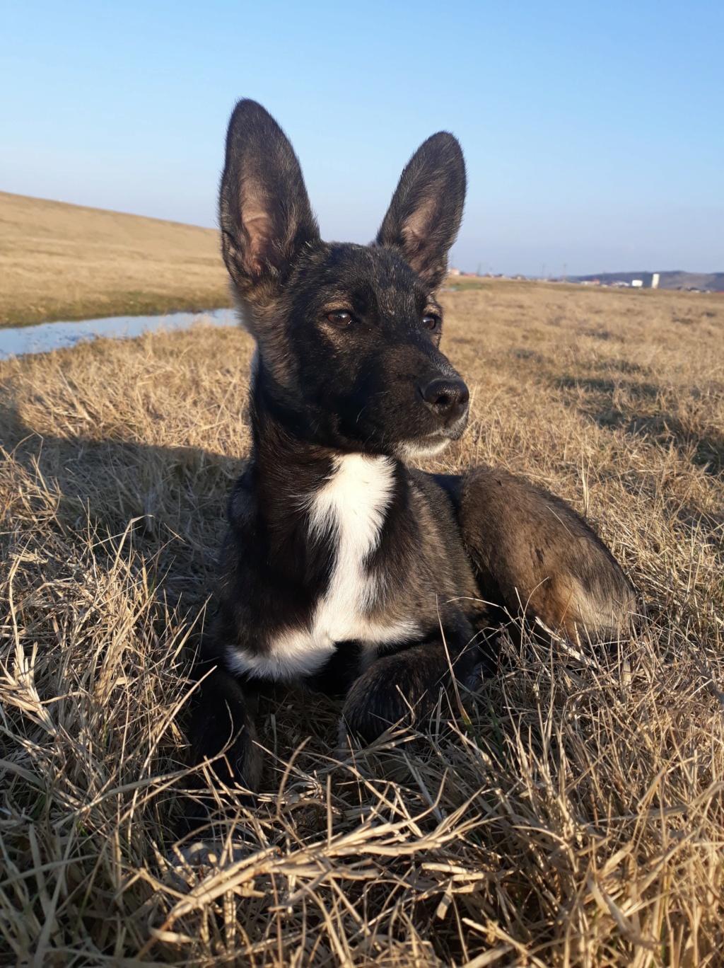 Archie- mâle- dans une famille d'accueil près de Târgu Frumos - sera en Famille d'Accueil dans le 67 en mars 1b6e1210