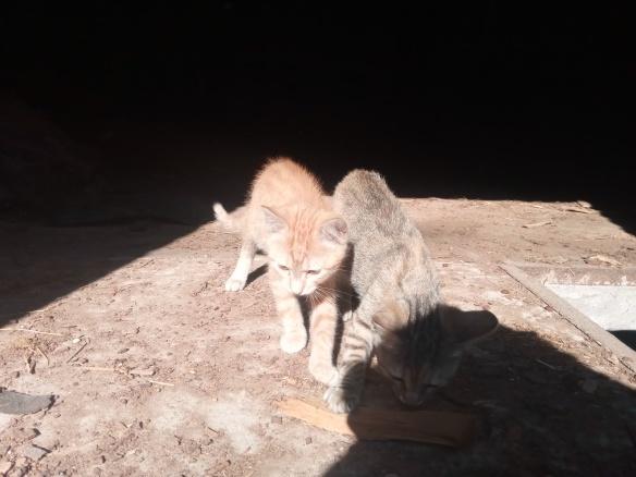 Mao (ex-Pixel) - Mâle chaton - en FA dans le 67 1feed410