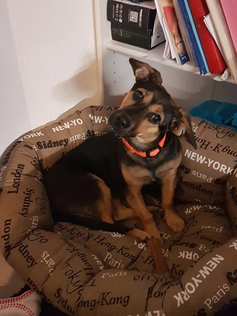 Etna - femelle - chez Andreea (Târgu Frumos) - reservé adoption 67 20181016