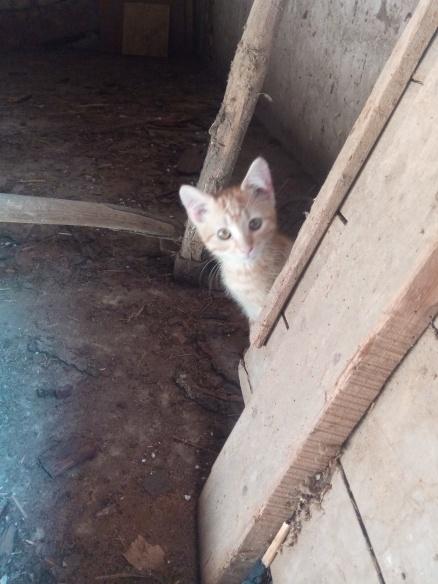 Mao (ex-Pixel) - Mâle chaton - en FA dans le 67 20735a10