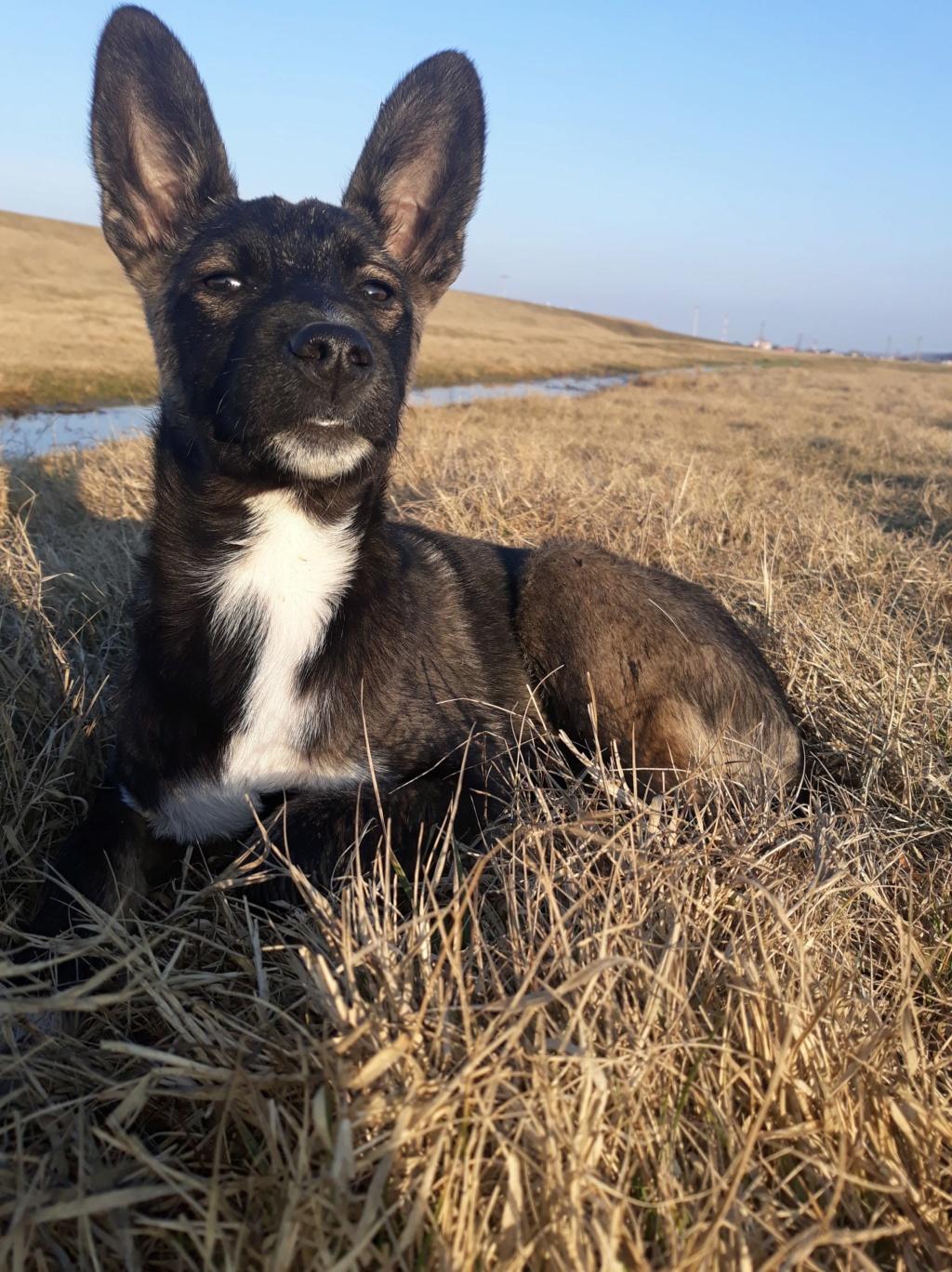 Archie- mâle- dans une famille d'accueil près de Târgu Frumos - adopté via Andréea 2cc68210