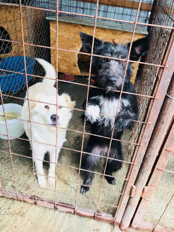 Stella - femelle - fourrière de Târgu Frumos - réservée adoption (68) 36243810